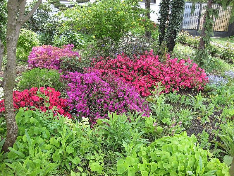 UWG beantragt mehr blühende Vorgärten